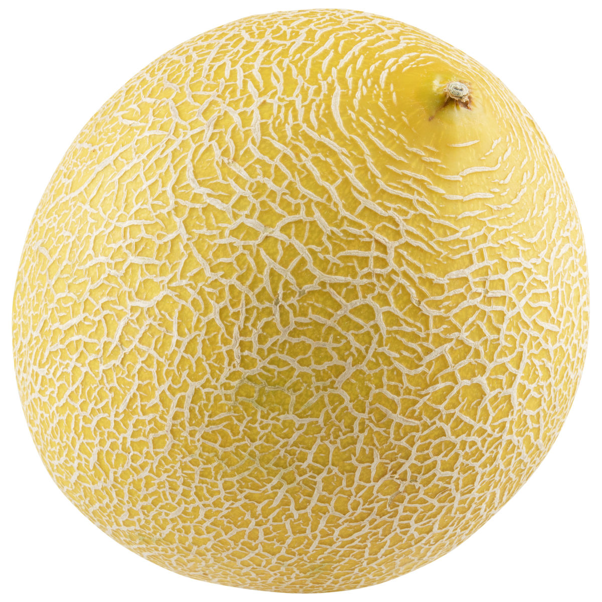 Melon Gallia