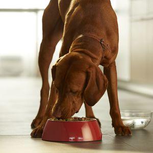 PURINA ONE Hondenvoer Medium / Maxi >10 kg Weight Control /Sterilised 2.5 kg